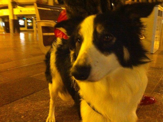 Jess the dog (Photo: Michael Williams)