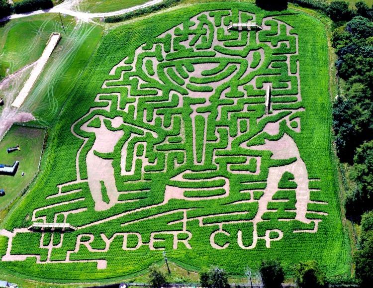 The Ryder Cup Maize Maze